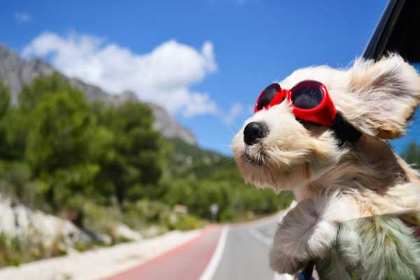 4 Tips for Driving With Your Dog